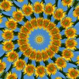 Sunflower2 5.jpg