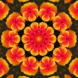 Hibiscus 3.jpg