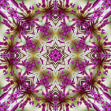 Allium 2.jpg