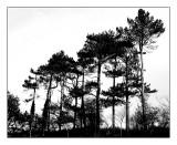Truleigh Hill, Sussex 3.jpg