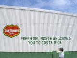 Del Monte banana plantation