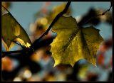 IMG_0962-leaves2.jpg