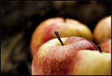 CRW_1806-apples2.jpg