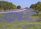 Road to Bluebonnet Heaven