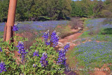 Bridge over Bluebonnet Waters