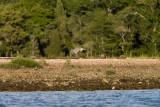 slt_gravel island_212.jpg