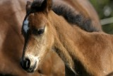 May 4, 2007- Young Colt
