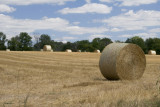 July 25, 2007 - Summer field