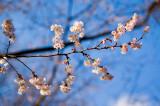 Spring In January