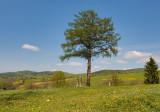 Landscape in Myscowa