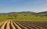 Beskid Fields