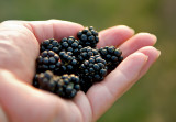 Sweet Blackberries