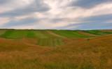 Grass, Fields And Sky