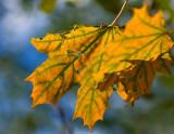 It's Fall