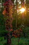 Autumnal Moods