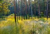 Grassy Forest