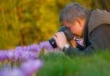 Shooting autumn crocus