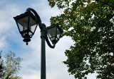 Lamps And Trees