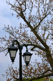 Lantern And A Spring Tree