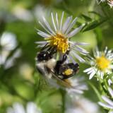 40D Bee