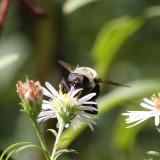 Bee Macro Front On