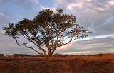 Tree at Sunrise 2