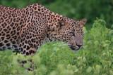 Yala National Park:  POST TSUNAMI