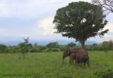 Udawalawe Sanctuary