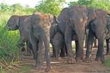 Protecting Baby elephant.jpg