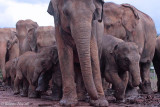 New Family Elephant orphanage.jpg