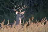 Choke Canyon Buck2.jpg