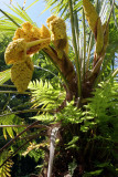 Palm flowers