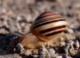 Snail & Obstacle