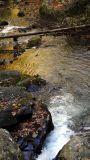 looking downstream 1.jpg