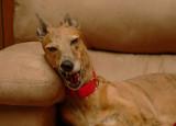 hunky yawn.jpg
