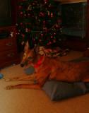 christmas hunk 2.jpg