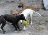puppy play.jpg