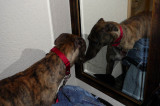 buster mirror.jpg
