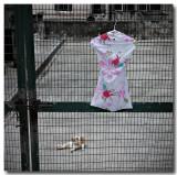 street cat 2.jpg