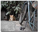 street cat 3.jpg