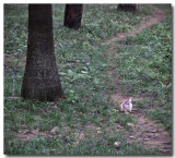I though I saw a rabbit.jpg