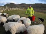 Feeding Sheep Horn Head.jpg