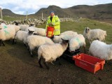 Feeding Sheepon Horn Head.jpg