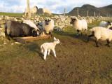 Lambing Time.jpg
