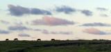 Horses on a hilltop, near Ahu Tongariki.