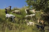 Algérie -  Annaba - Sur les pentes de la casbah