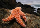 Seashore Creatures of Southern California