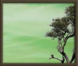 Osprey in green