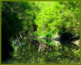 my sweet Duchene river
