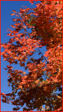 Red and Orange ......     A Fruit color for our trees